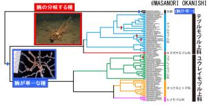 ツルクモヒトデ目の系統樹と、腕が単一な種のマッピング。赤で示したクレードは腕の分岐するグループを表す。